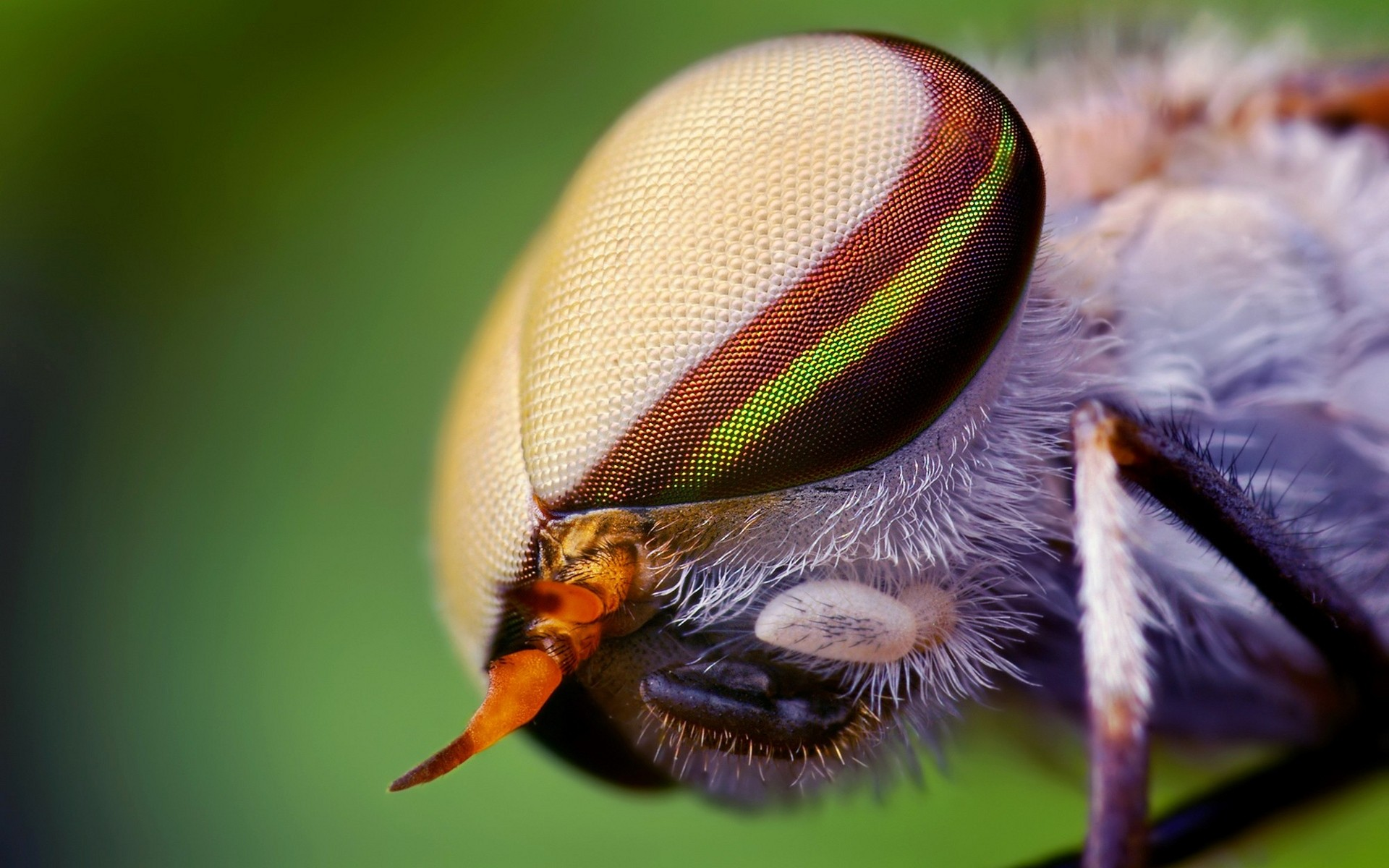 nature-eyes-animals-insects-wildlife-fly-macro-1920×1200-hd